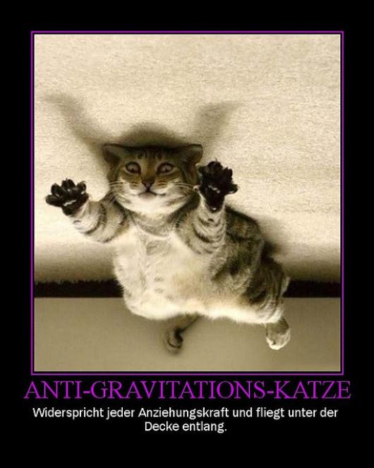 Andere Katzen können dafür fliegen