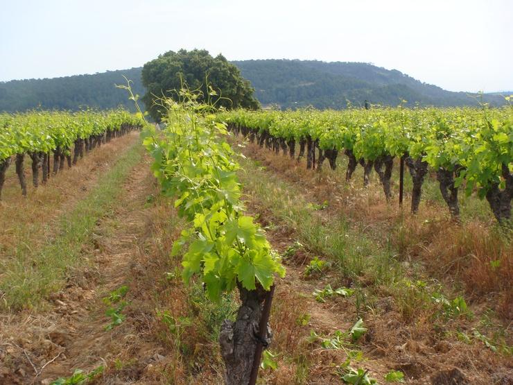 Languedoc : terre de vin et de passion | Crédits : MS