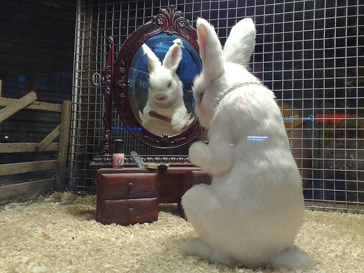 """""""Rabbit"""" ist der letzte (erotische) Schrei"""