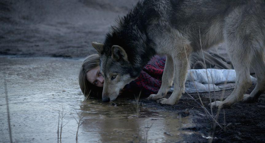 """Image for Elle a vu le loup - """"Wild"""" de Nicolette Krebitz"""