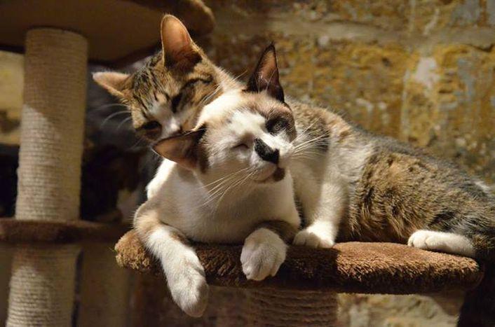 Image for The Paris Cat Café: Le Café Des Chats