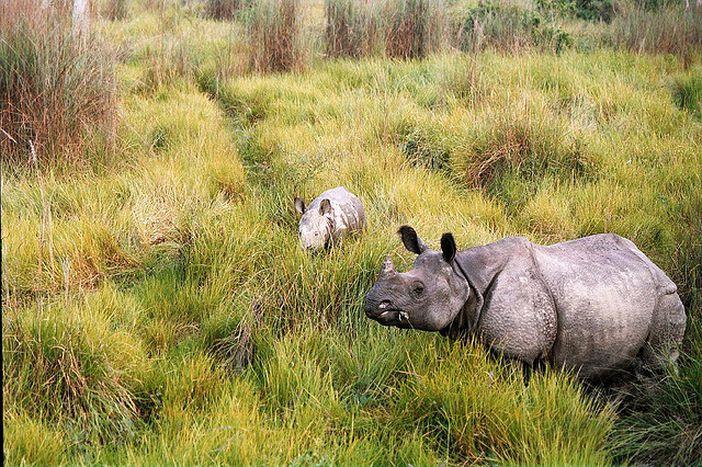 Image for nepal: und vor dem nashorn läuft man weg