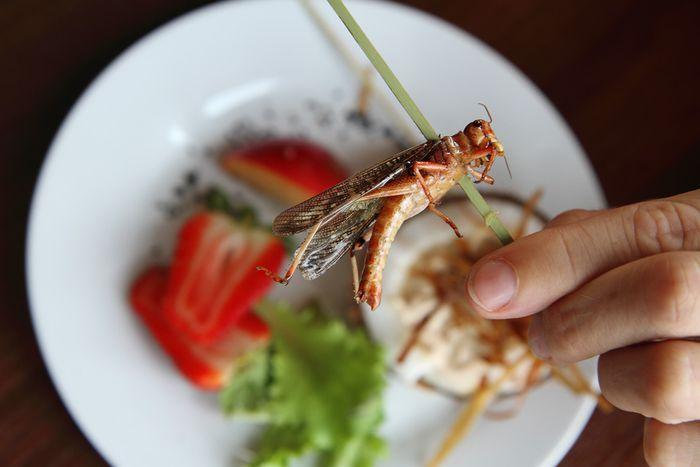 Image for Croustillant, le restaurant d'insectes de varsovie