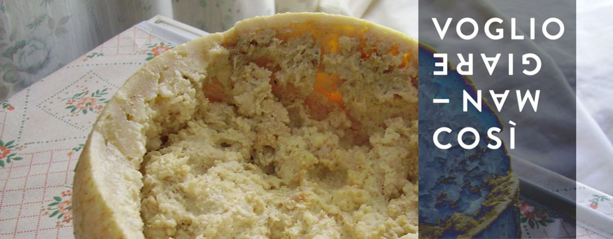 Image for Casu Marzu: The world's most dangerous cheese