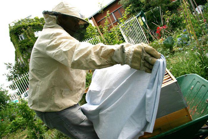 Image for Les abeilles parisiennes : le miraculeux buzz urbain
