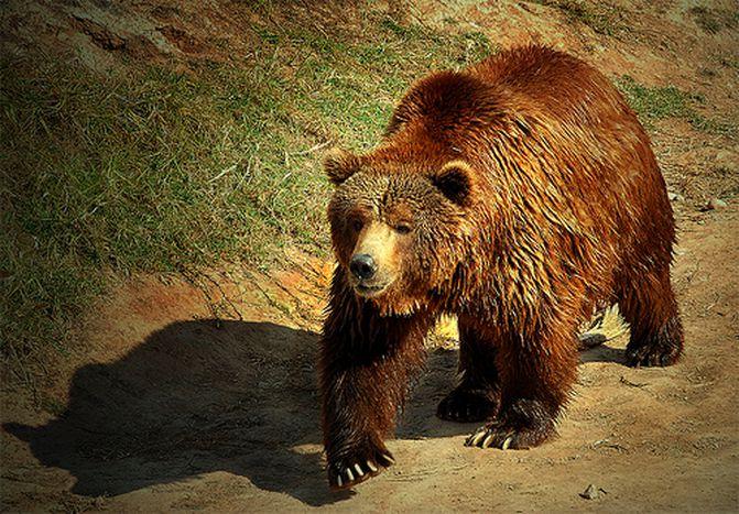 Image for Los osos no entienden de fronteras (ni de política)