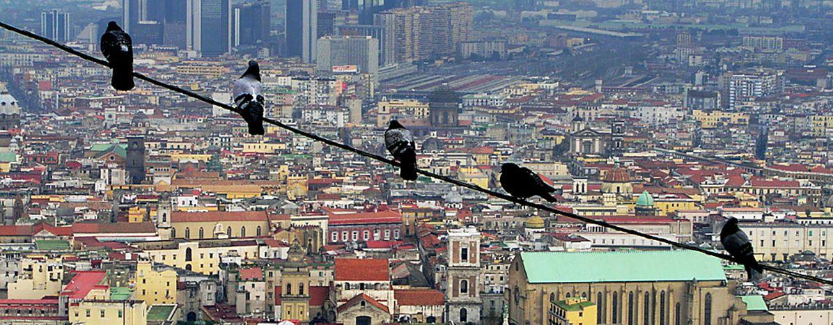Image for La camorra tra violenza, disoccupazione e traffici internazionali