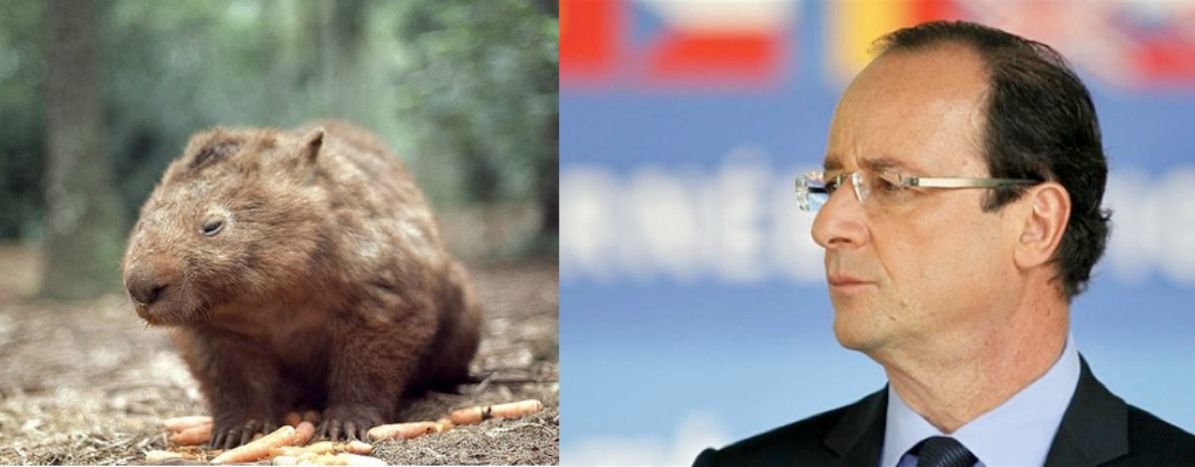 Image for 5 animals that resemble France's presidential candidates