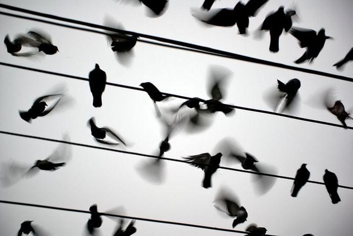 Image for Colombier linguistique : avoir pigeon sur rue en Europe
