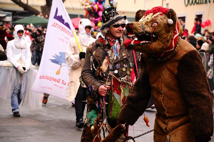 """Image for El oso pardo en Eslovenia: """"Pero sigo siendo el rey"""""""