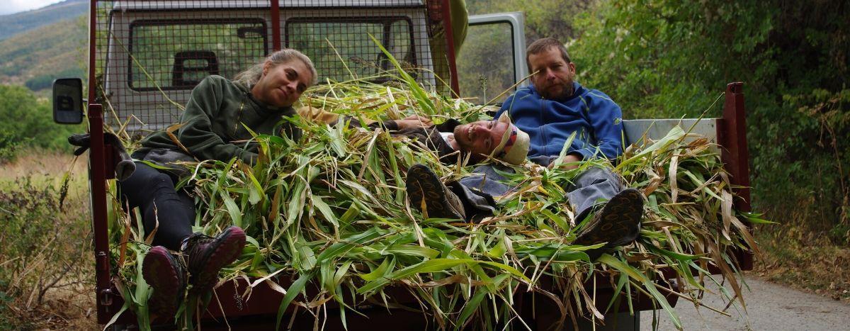 Image for Los millenials búlgaros se van al campo: una alternativa verde