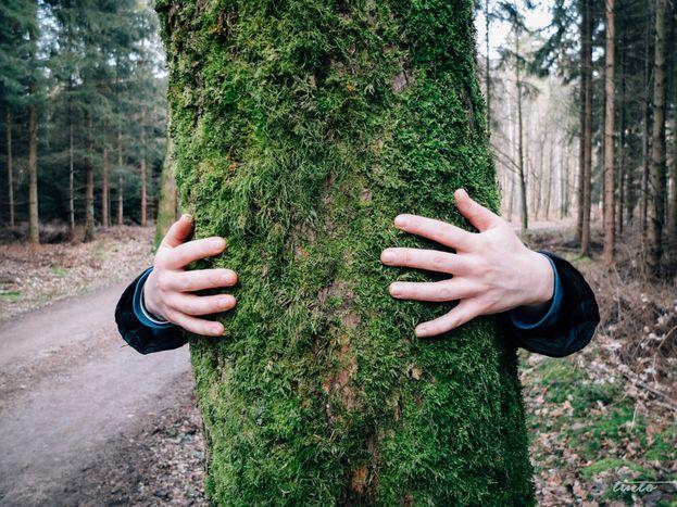 Image for La política ecológica:¿Logrará seducirlos?