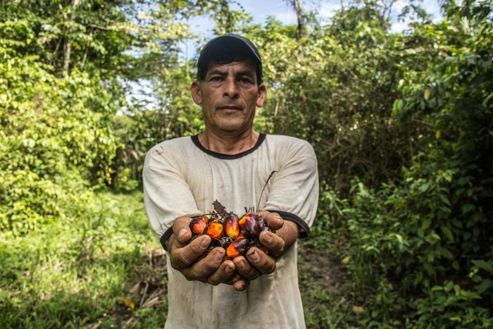 Image for Understanding the palm oil war