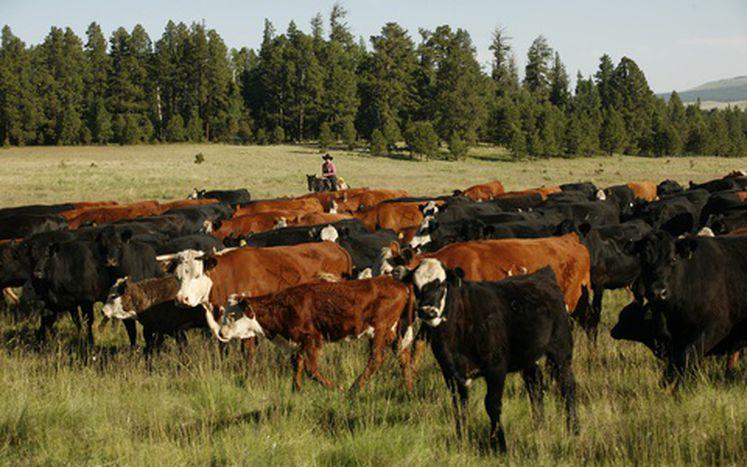 Image for ¿Es la ganadería la mayor amenaza para el planeta?