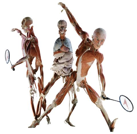 Image for Body Worlds: l'antropocentrismo in mostra