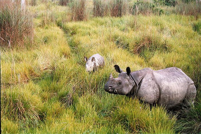 Image for nepal: spot a rhino, steady, go!