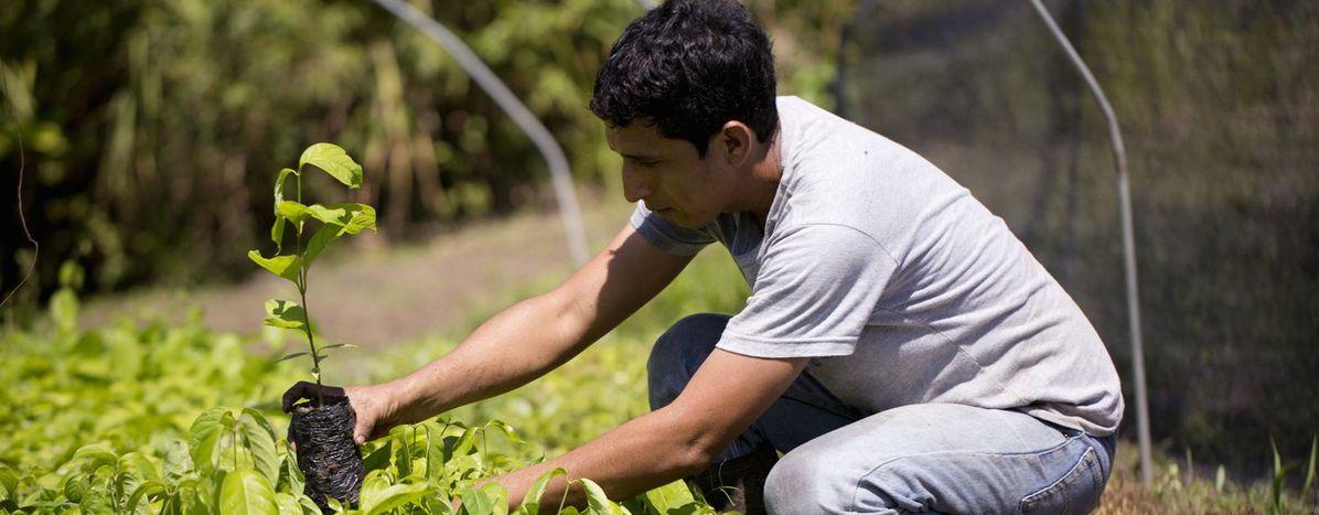 Image for Ecosia: Per Suchmaschine Bäume pflanzen