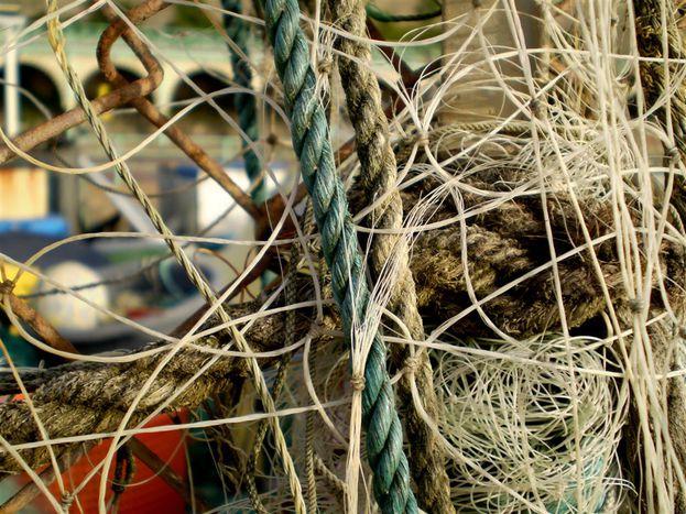 Image for Chalutage profond : «L'industrie de la pêche a peur»