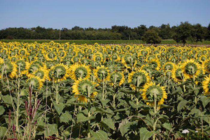 Image for Comment la PAC influence l'agriculture européenne
