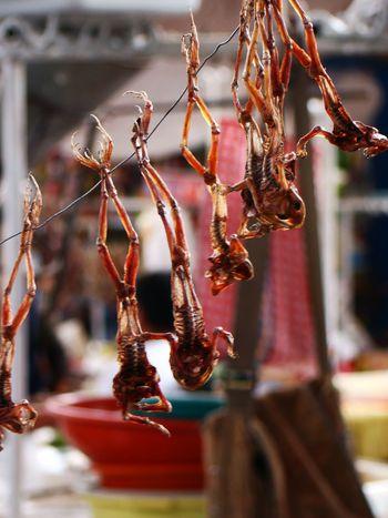Image for Festin chez un chaman péruvien : grenouilles, cochons d'Inde et mariri