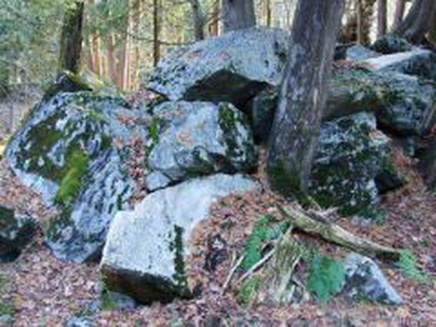 Image for Le marbre qui cache la forêt.