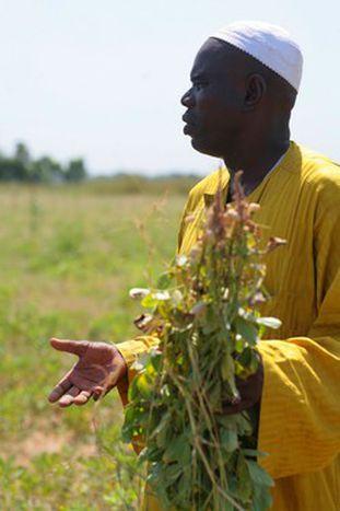 Image for In Senegal, farmers versus Europe
