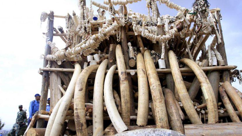 Image for « Le jour où j'ai quittéma tour d'ivoire»