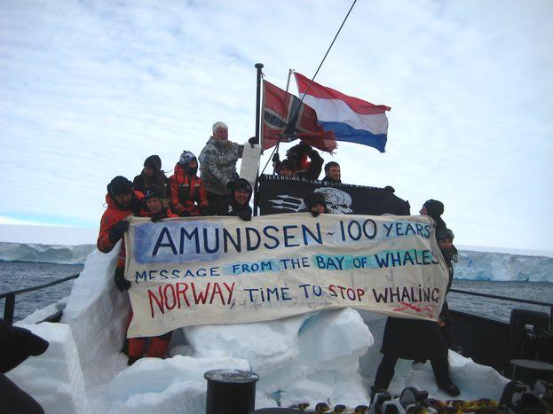 Image for Sea Sheperd arponea la pesca japonesa de ballenas