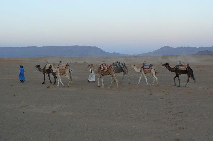 Image for Calendrier 9 de la poésie à venir: La bibliothèque mobile à dos de chameau