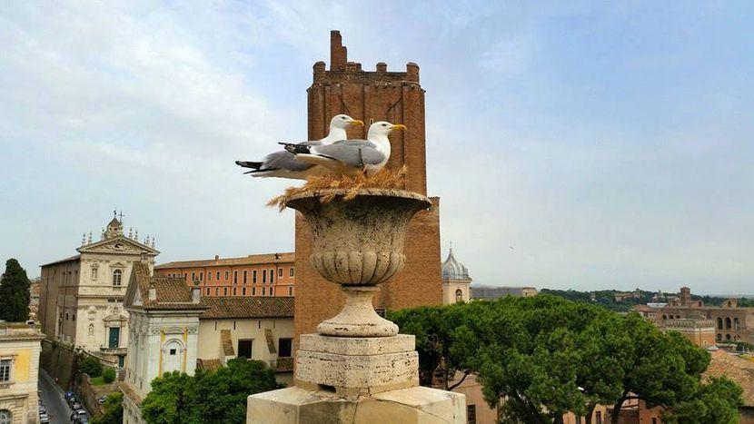 Image for A Roma non serve l'expo