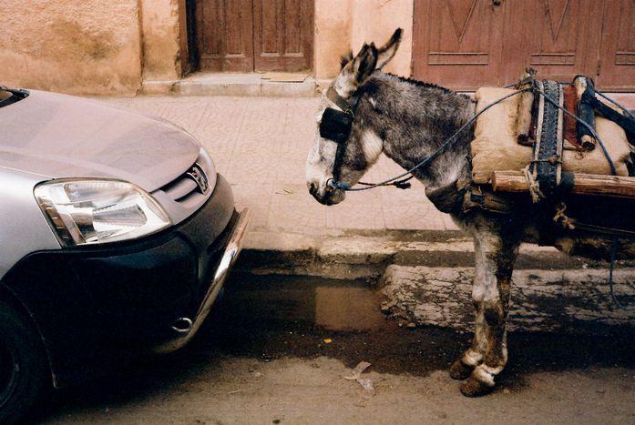 Image for Sicile : le voiturier clandestin expliqué à un Danois